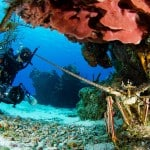 Reef Diving in Cozumel