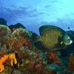 reef_5