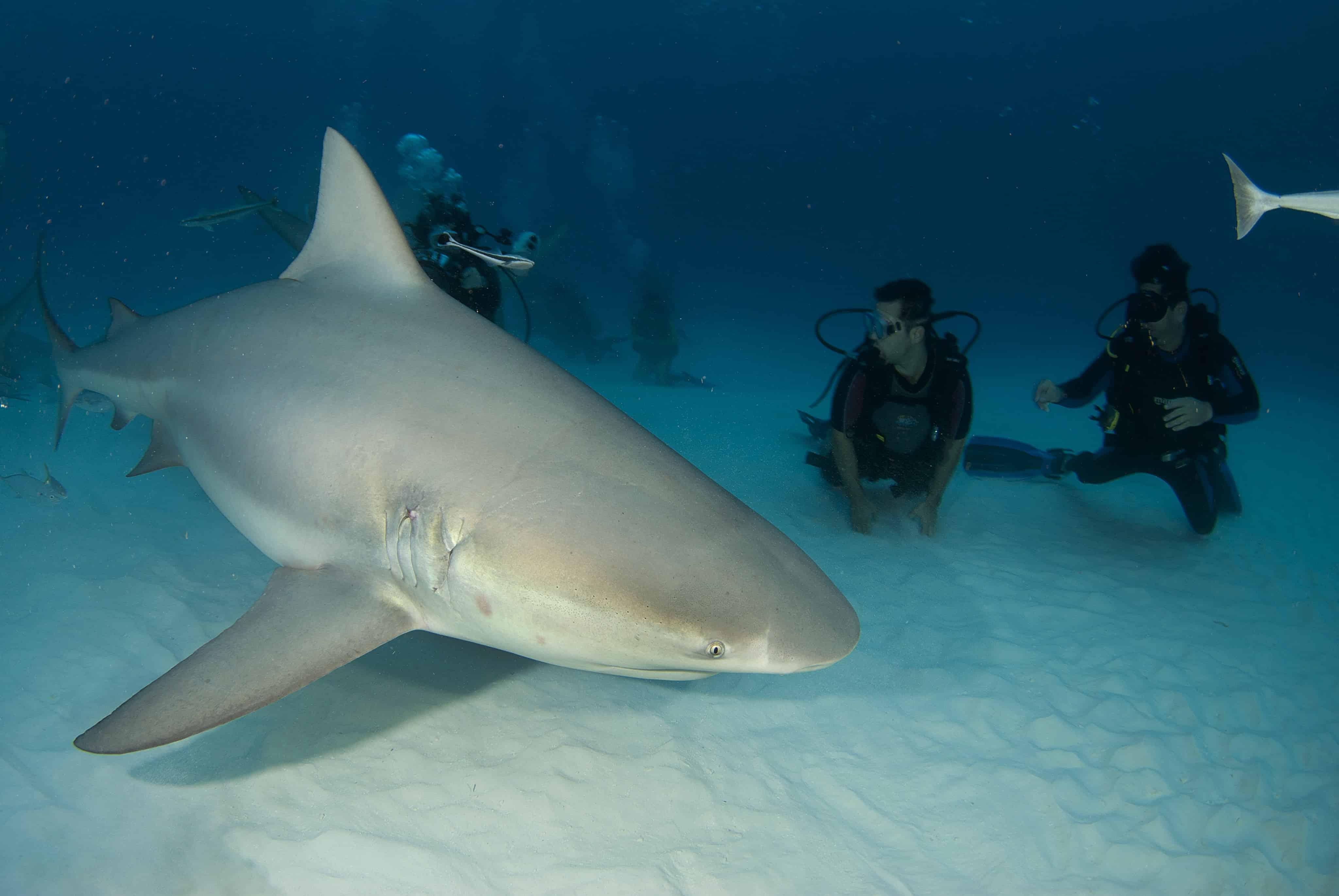 SHARKSCHOOL 2020 - Pro Dive International