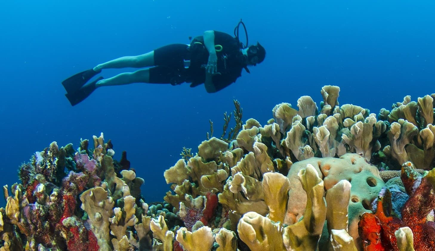 scuba diver next to coral reefs