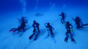 sharkschool-2016-pro-dive-mexico-bull-shark