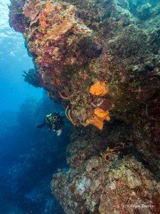 cozumel_reefs
