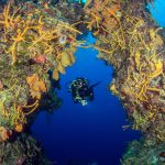 cozumel_diving