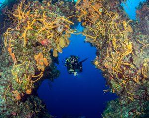 cozumel_diving