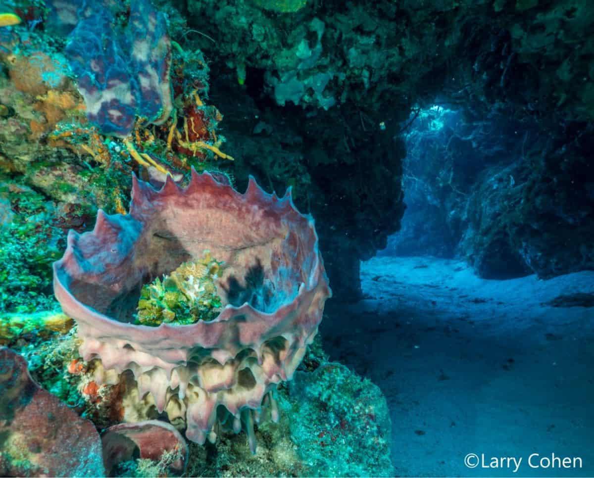 reef-cozumel
