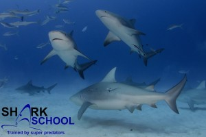Sharkschool 2016