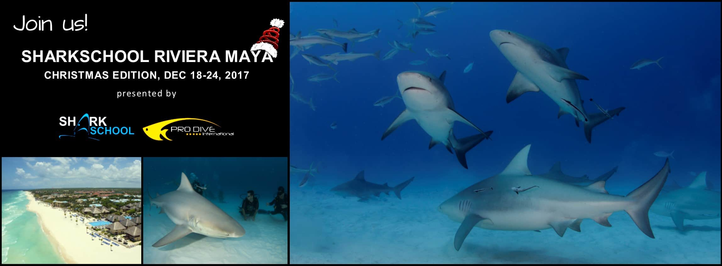 sharkschool-2017-pro-dive-international-mexico