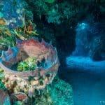 Day 1-Palancar Caves-Paco Del Cedral2