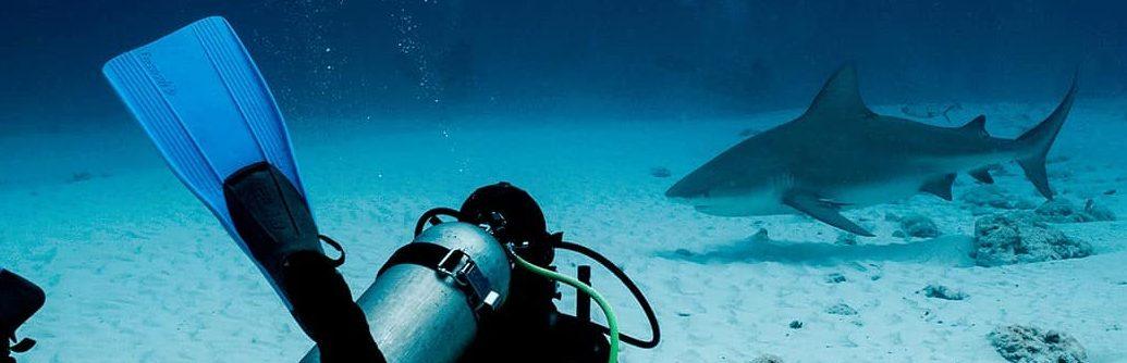 bull shark diver