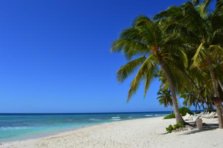 saona-beach-with-palm-trees